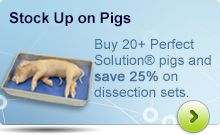 Buy 20+ Perfect Solution® pigs and save 25% on dissection sets!