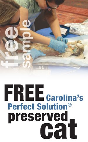 Free Carolina's Perfect Solution Cat