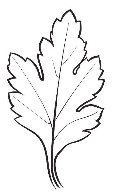 Daisy Leaf