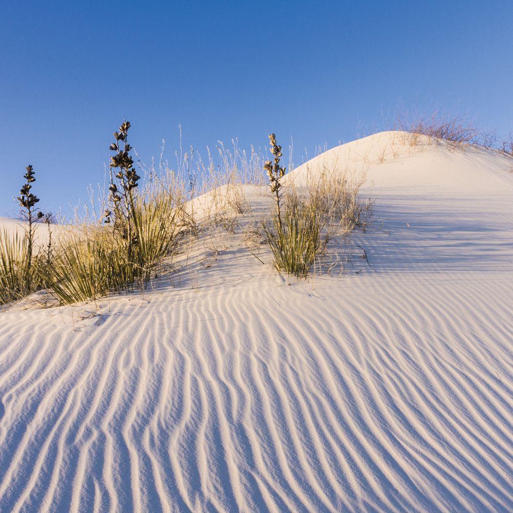 Sand Dune Erosion In A Box Top Carolina Com